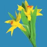 Δώρο Χάρτινα Λουλούδια