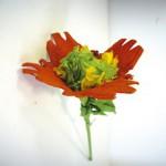 Λουλούδια για Δώρο από Αυγοθήκες