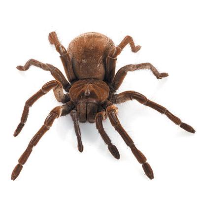 Αράχνες : Υπάρχει Λόγος να τις Φοβόμαστε;