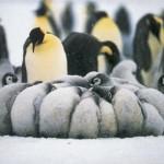 Ποια Ζώα Ζουν υπό το Μηδέν