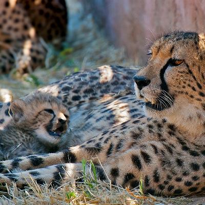 Οικογενειακές Εξορμήσεις στο Αττικό Ζωολογικό Πάρκο