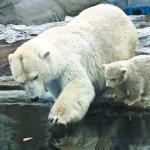 Αρκούδες, που Ζουν και από ποιους Κινδυνεύουν